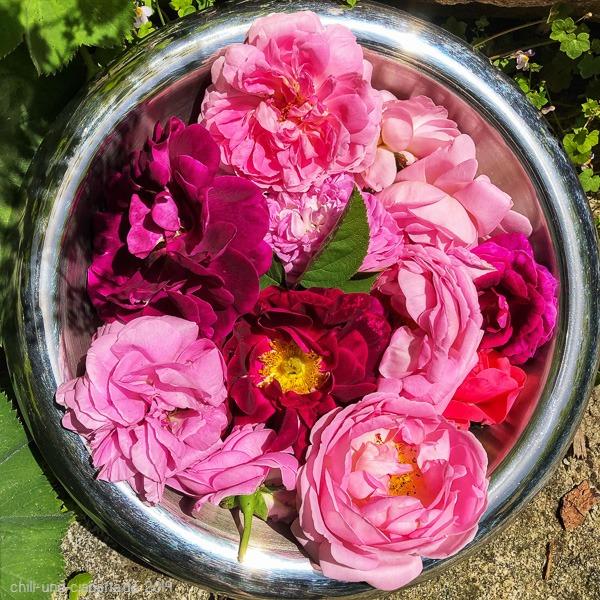 Duftrosenblüten